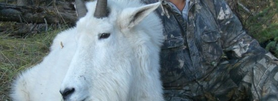 A Mountain Goat Hunt Birthday Surprise